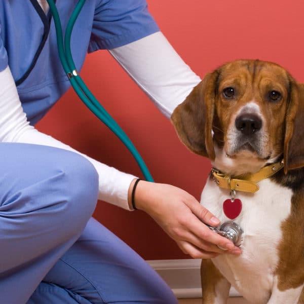 Veterinary Business Loans